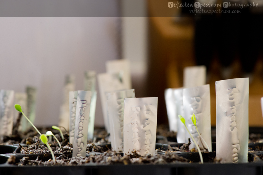 DIY Plant labels / markers made from recycled soda cans