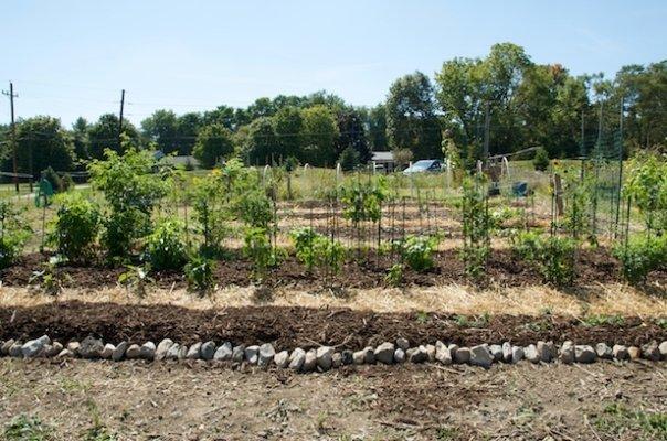 My first garden at the Greenwood Community Garden