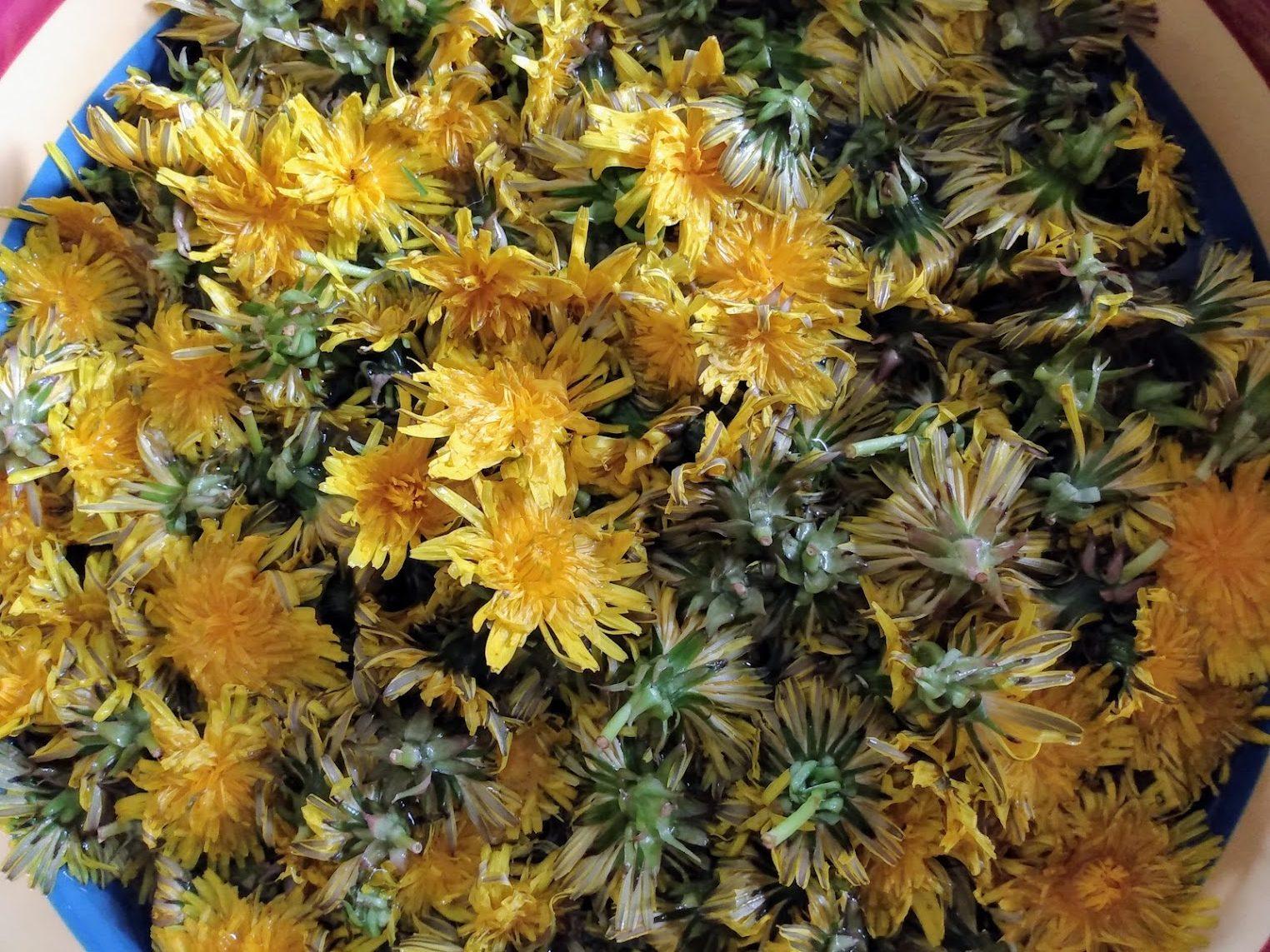 Washing Dandelion Flowers
