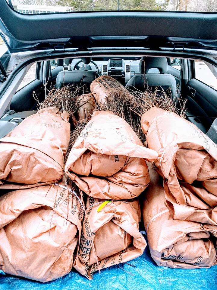 1,000 Trees In The Back Of A Prius